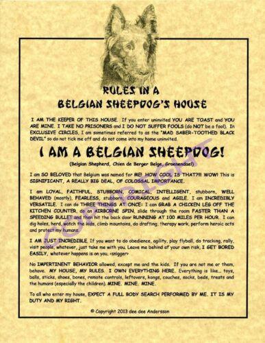 Rules In A Belgian Sheepdog