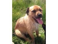 Bruce: Friendly, playful Jack Russell/terrier with bags of character