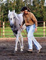 Lessons Training Natural Horsemanship! Horse Weanling Yearling