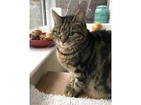 5yr old Female Cat