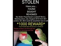 Missing stolen lovebird 1000 Reward