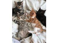 Amazing kittens 💕
