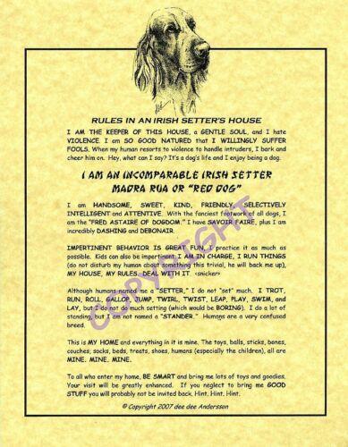 Rules In An Irish Setter