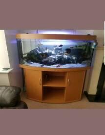 Juwel vision 450L bow front fish tank Aquarium