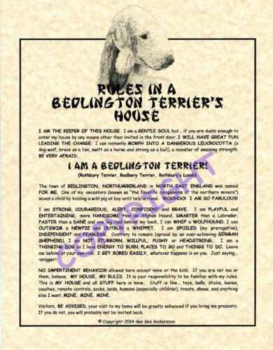 Rules In A Bedlington Terrier