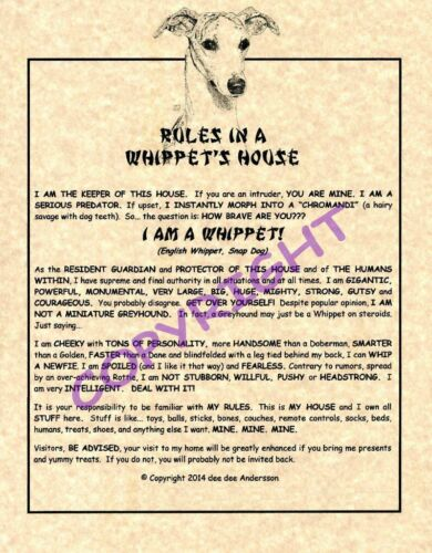 Rules In A Whippet