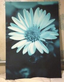 Two teal canvas flower pictures