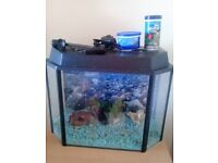 35 L fish tank with lights + pump+some accesories