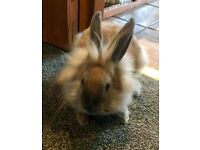 Rabbits looking for a new home