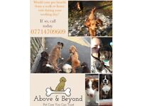 Above & Beyond. Pet Care Service You Can Trust