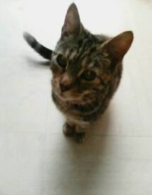 Lovely 18 month old tabby cat