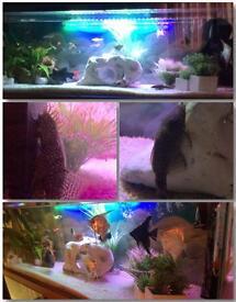Aquarium and set up