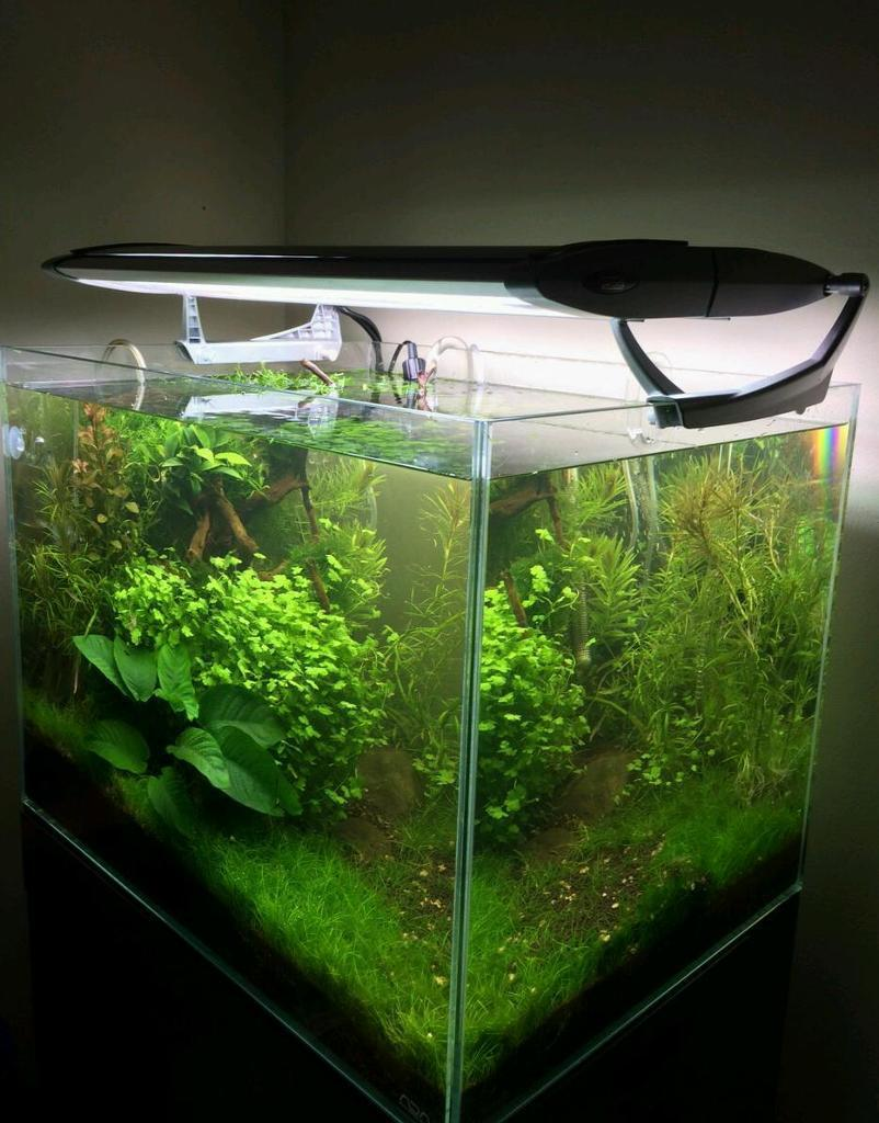 Ada cube garden 60 100 litres aquarium for sale in for Ada fish tank