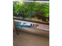 Cheap lovely fishtank in vgc