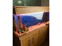 Large aquarium and accessories