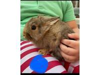 Baby bunnies needing homes ASAP