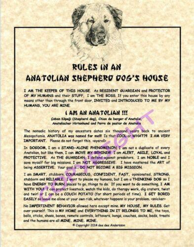 Rules In An Anatolian Shepherd Dog