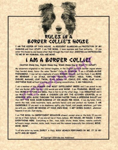 Rules In A Border Collie