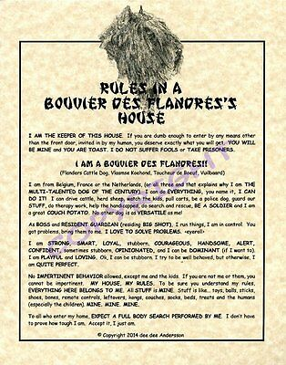 Rules In A Bouvier des Flandres's House