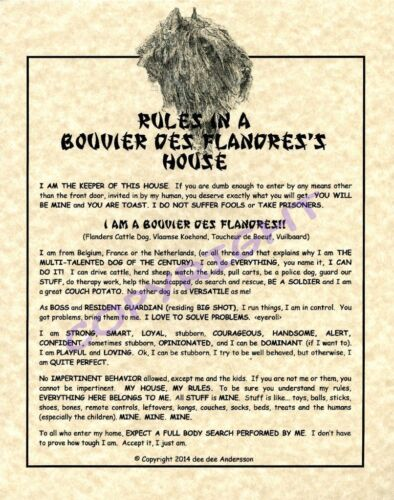 Rules In A Bouvier des Flandres