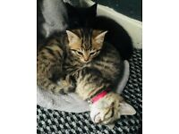 Kittens ready now *UPDATED PLEASE READ*