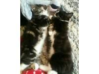 Kitten Foster Care