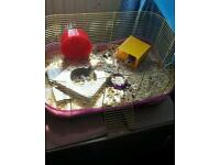 Hamster and cage for sale!