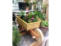 Filled Wheelbarrow planter