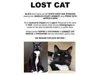 LOST CAT CONSETT AREA