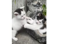 2 Adorable Kittens for sale