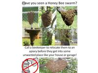 Bee swarms in Stratford upon Avon collected free