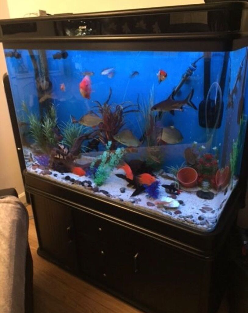 450 litre cleair black gloss aquarium fish tank in rugby. Black Bedroom Furniture Sets. Home Design Ideas