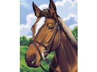 Looking Quiet Horse