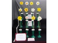 Norfolk & Norwich Horticultural Society Spring Show including East of England Daffodil Championship