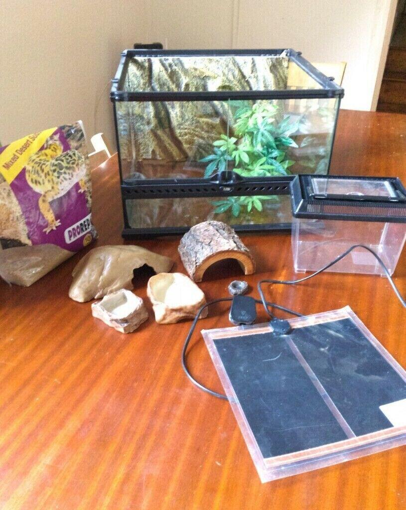 Complete Reptile Starter Kit Leopard Gecko Bearded Dragon Vivarium Heat Mat Amp More In