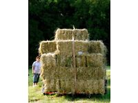 Hay, 16 bales of hay for sale.