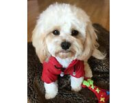 Brand new puppy/dog red Mink raincoat