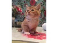 Lovely kittens for sale