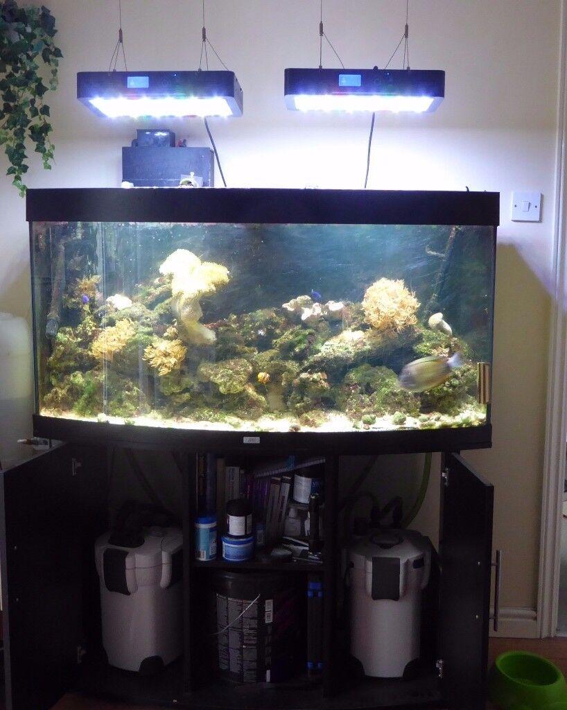 marine tank set up