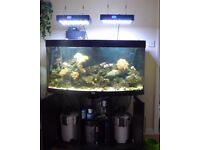 fish tank as a whole lot inc contents lights etc ( marine )