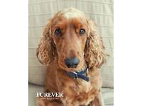 Furever Dog Walking Edinburgh (Dog Walker/Pet Sitter)