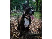 Dog Walker Greatbarr