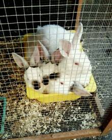 Female rabbit looking for a new family