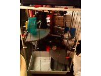 Rat csge and rat care items for sale