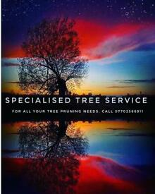 Free tree inspection and Tree Application submission