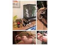 Crested gecko and full set up + extras