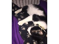 3 kittens ready in a few weeks wanted loving homes