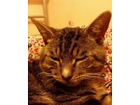 MALE TABBY CAT FOUND IN LEEDS CITY CENTRE