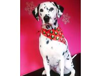 Certified Professional Dog Groomer. Limited spaces available for £15 Christmas special offer Grooms