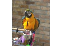 lovely blue and gold macaw